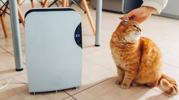 Will Air Purifier Help With Cat Hair?